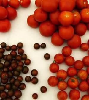 tipos-de-tomates