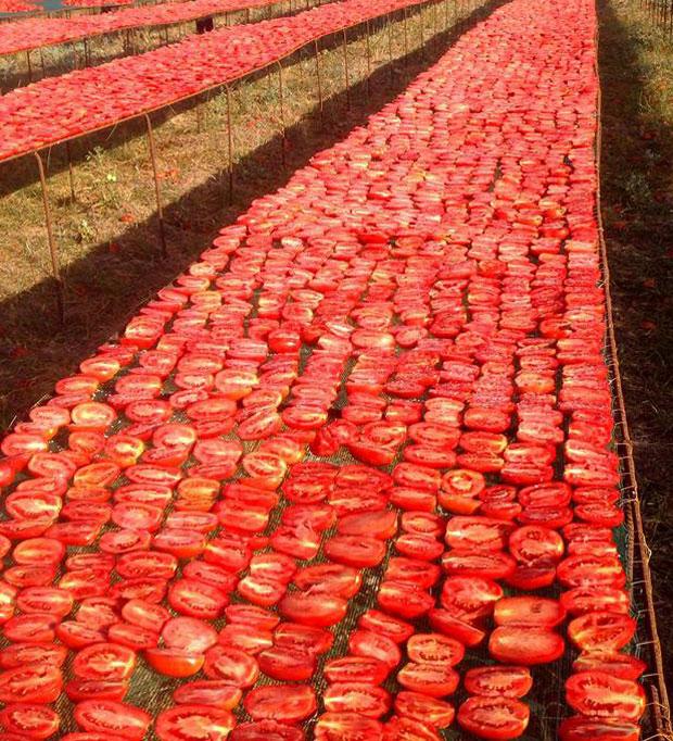 Cómo secar tomates con éxito
