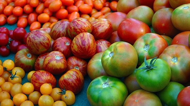 ¿Qué tomates puedo cultivar en mi huerto urbano?