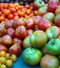 variedades-de-tomates