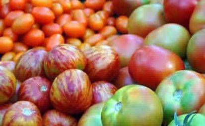 Planteles de tomates