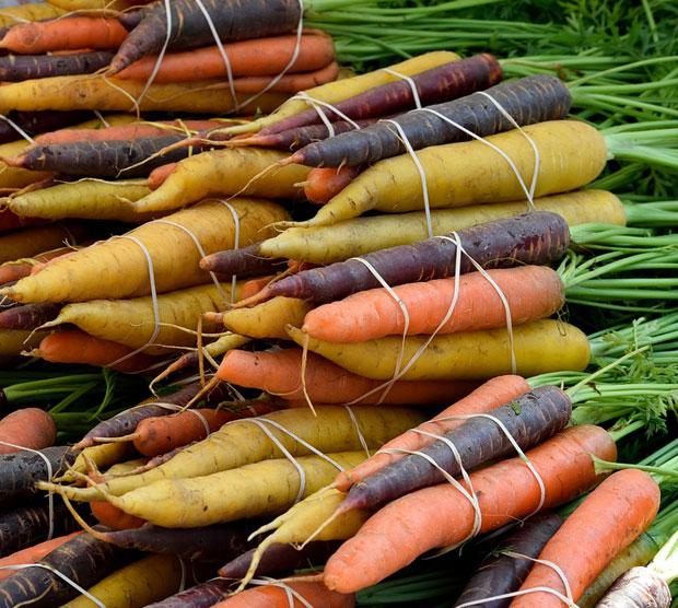 Variedades de zanahorias