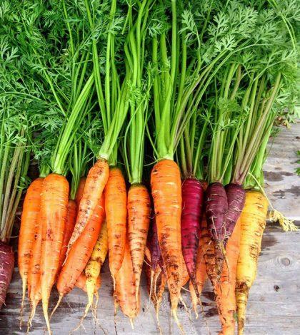 Cómo sembrar zanahorias con éxito