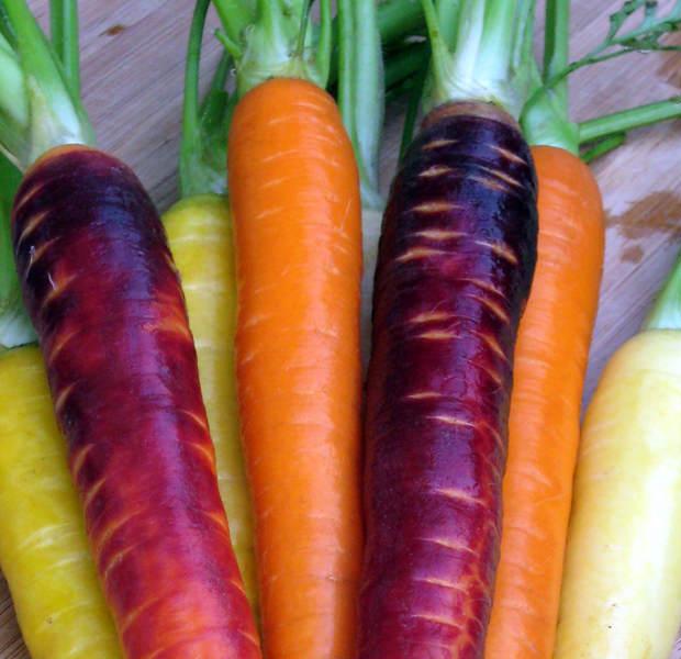 'Arcoiris' de zanahorias